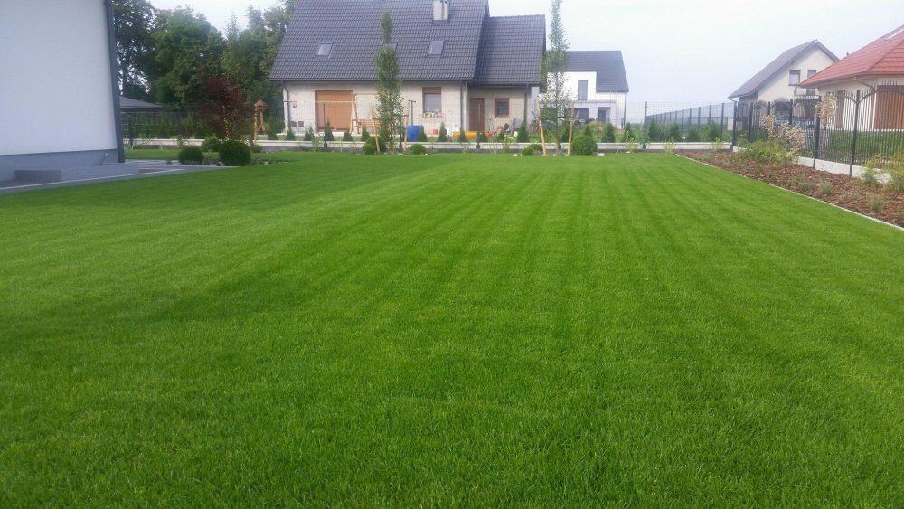 Trawnik zakładanie