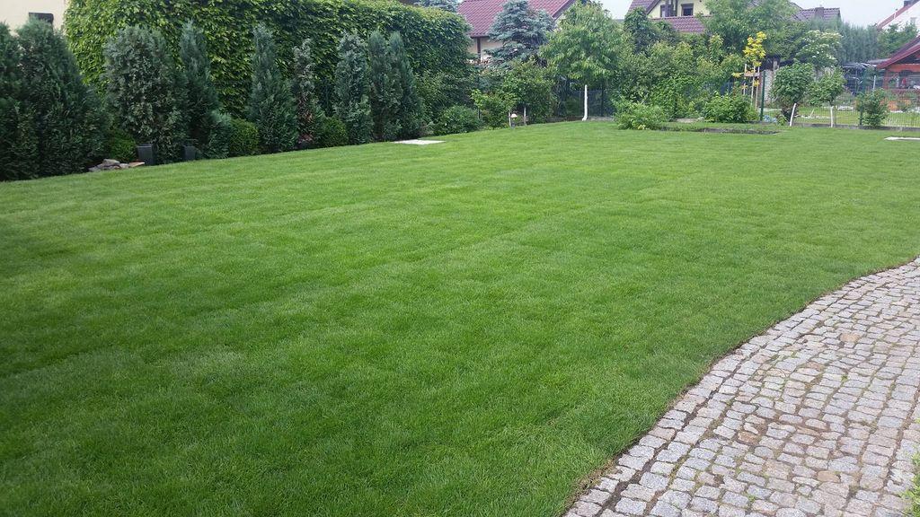 Nawadnianie i trawa w rolce